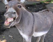 Donkey Sex: The Most Bizarre Tradition